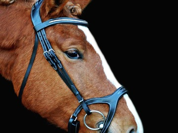 Selling: Anatomical bridle + reins